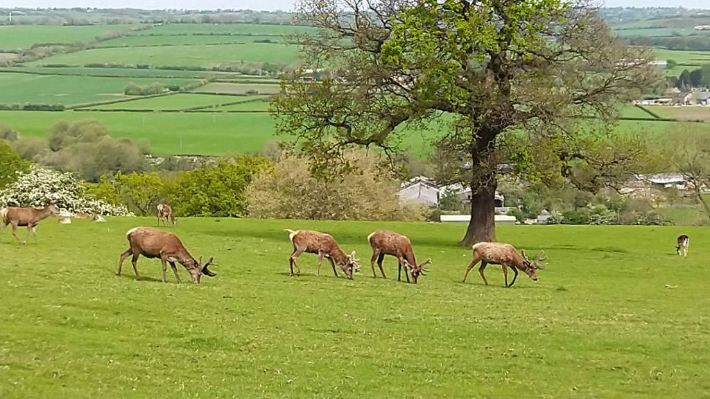 Four deer grazing in a field