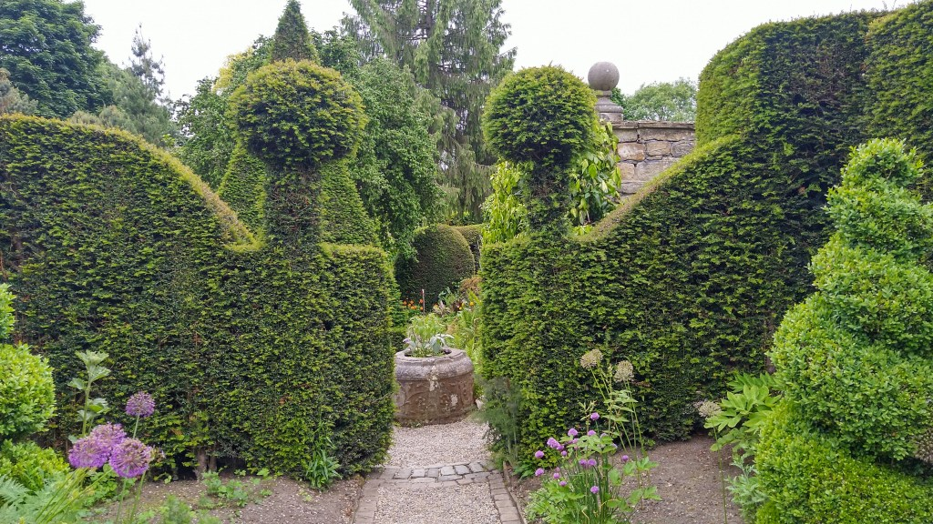 High yew hedges with a garden path running between them clipped into ball shapes at the top corners